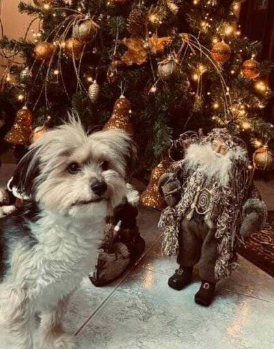 Γιατί υιοθετούνται περισσότερα αδέσποτα την περίοδο των Χριστουγέννων;