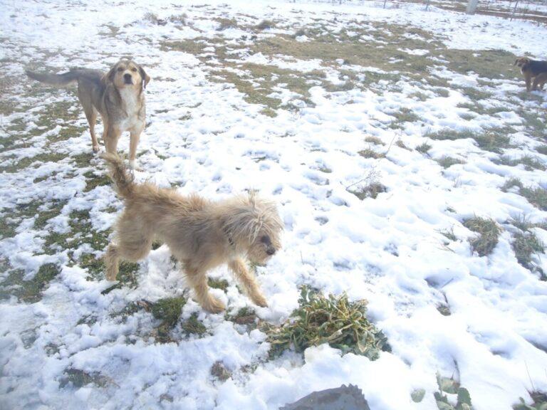 Χειμερινή απόδραση με το σκύλο σας