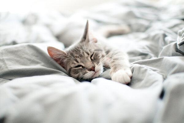 Ύπνος στο ίδιο κρεβάτι με τη γάτα: ναι ή όχι;