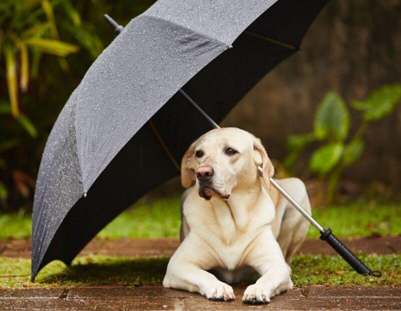 3+1 μέτρα προστασίας από τη βροχή στη βόλτα με το κατοικίδιό μου