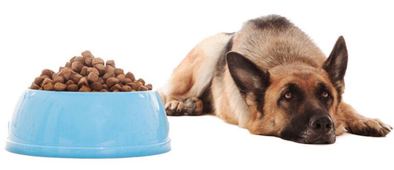 Ο σκύλος μου δεν τρώει την ξηρά τροφή του. Τι φταίει;