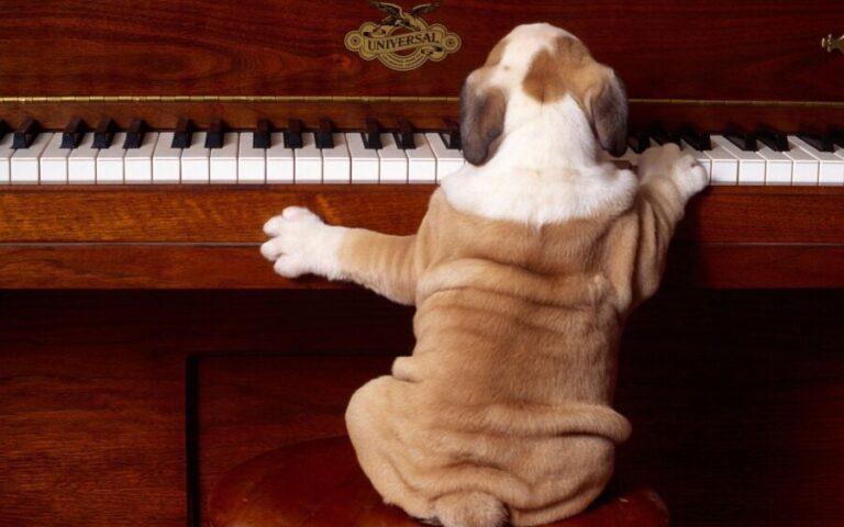 Μουσική: Το αγχολυτικό των κατοικιδίων!